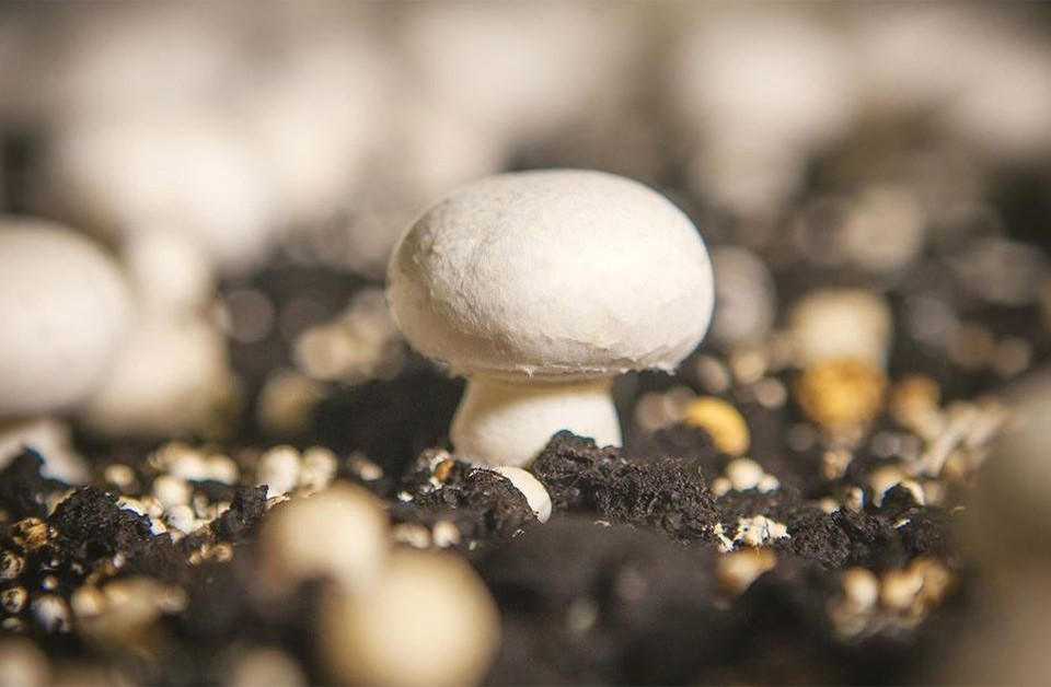Meadow Mushrooms: World-class sustainability reporting